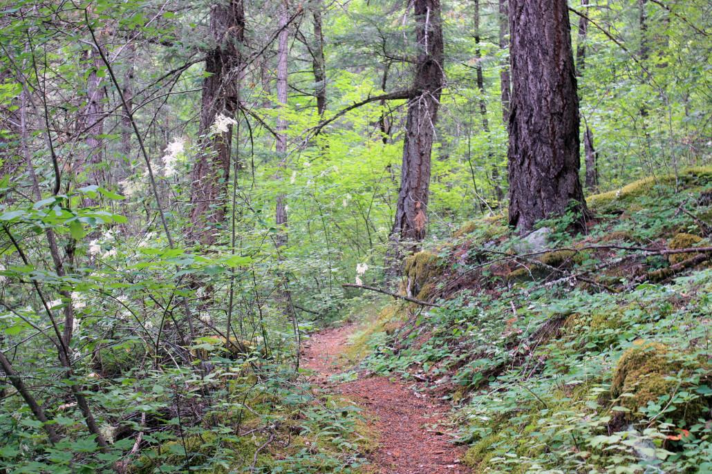 brigade trail