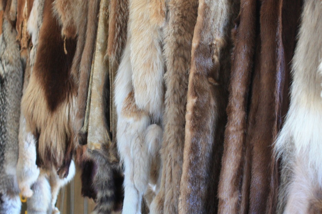 Furs at HBC replica fort at Fort Langley, B. C.