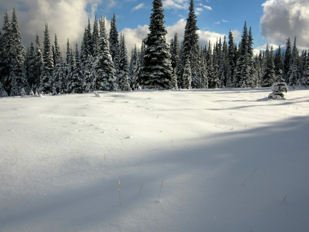 This is the Garden of Eden on the HBC brigade trail over the Coquihalla, photo taken by Kelley Cook in November 2015