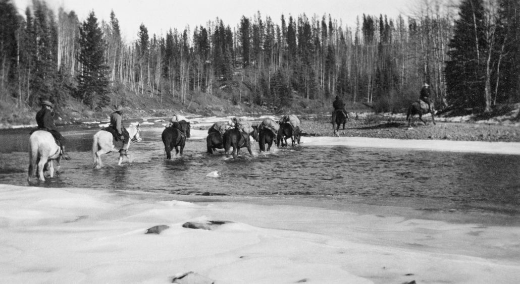 Packhorses on Athabasca Portage