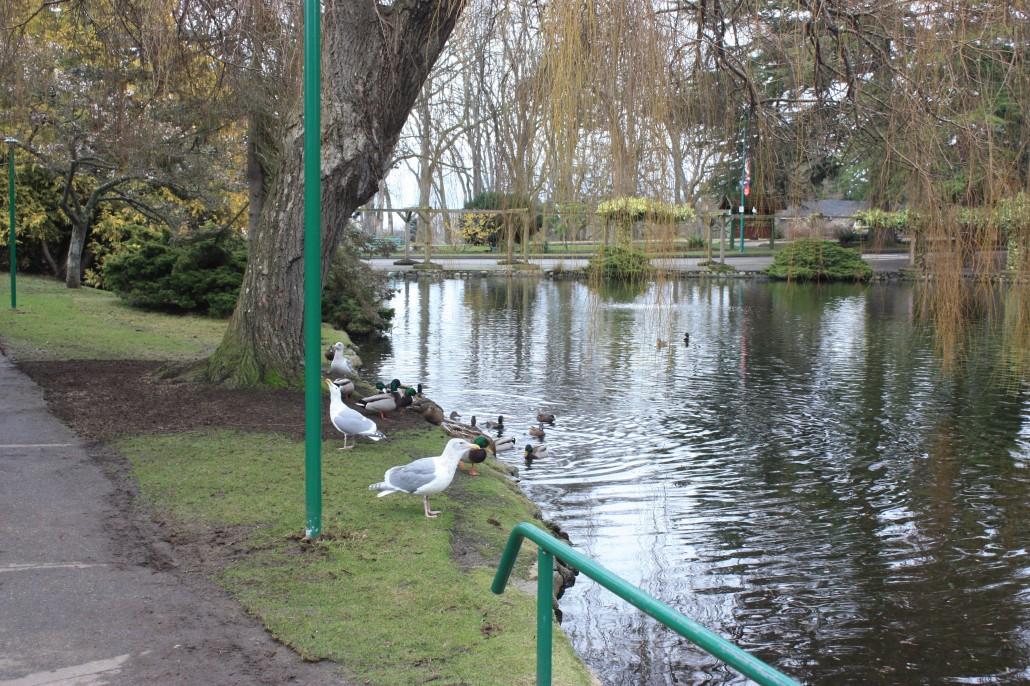 Ponds in Beacon Hill Park, Victoria, B. C.