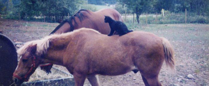 Saskatchewan Horses